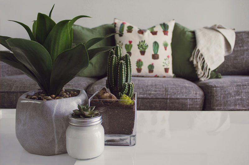 plant-blog