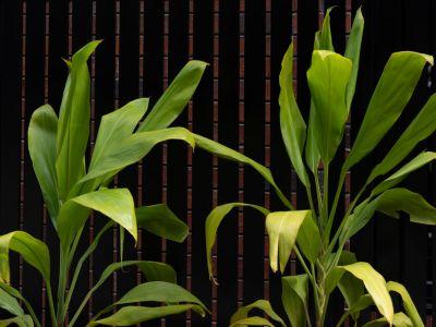EBV_PLANTS-1663