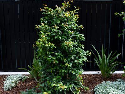 EBV_PLANTS-1667
