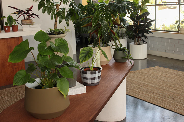 pot plants clustered together in store