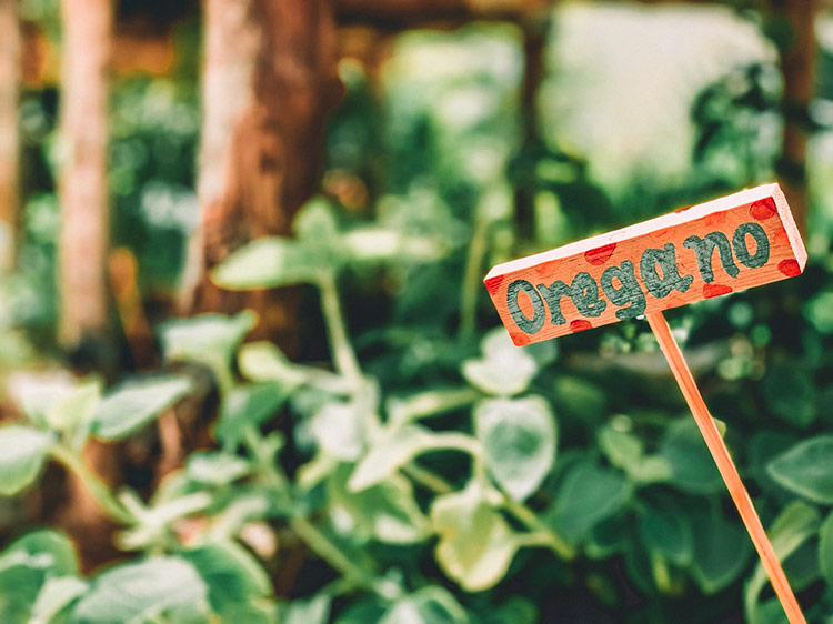 a sign sitting inside a herb garden filled with oregano with the word oregano painted on it